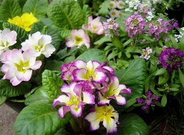 Flower2007