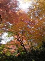 Ooyamazakisansou1