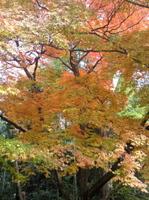 Ooyamazakisansou2