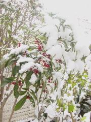 snow_flower