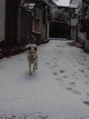 snow_kaname