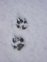 snow_kaname2